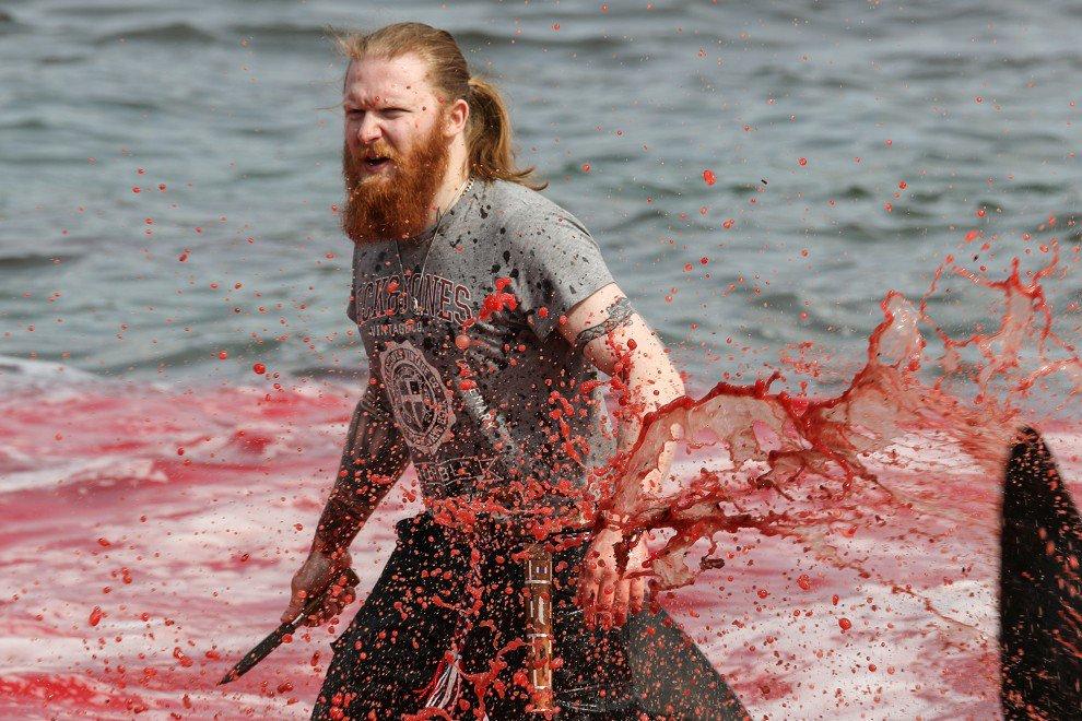 Unzählige Delfine und Wale auf den Färöer-Inseln abgeschlachtet - google nilzeitung.com